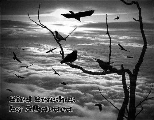 bird-brushes9_thumb